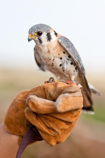 owl ladies pyrmont